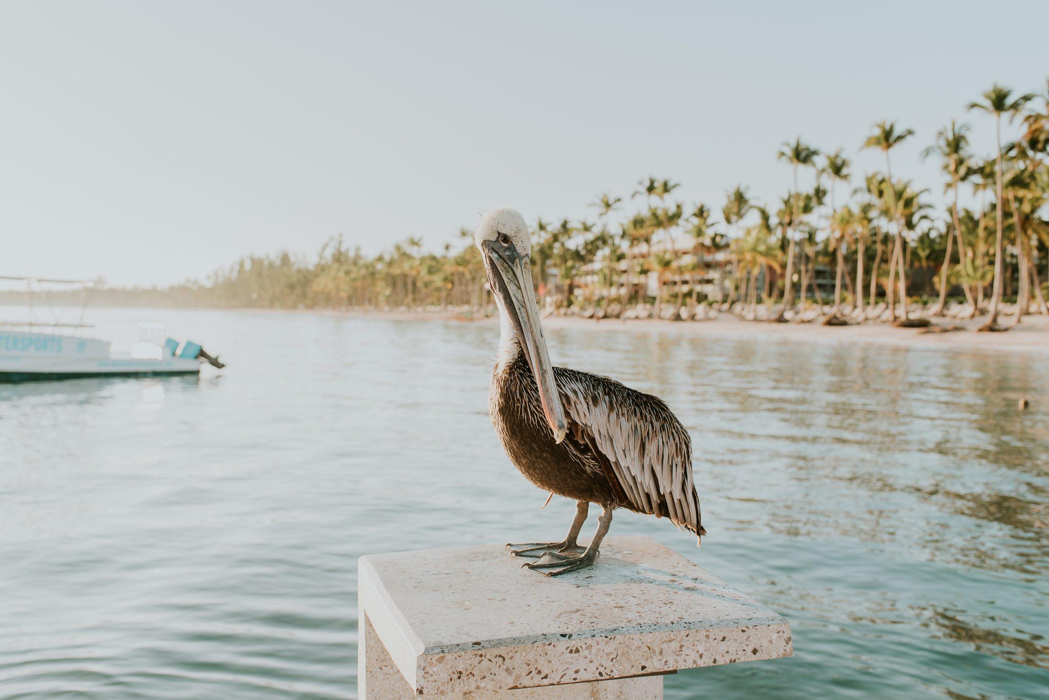 The Keeping Family {Punta Cana}