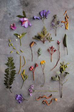 BotanyTumblr