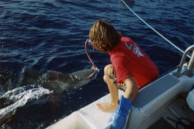 Tempting a shark off the coast of Oahu