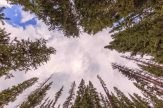 I was busy looking ont he ground for an interesting shot, when by chance, I gazed up to check the weather and became enthralled with the circle of trees above my head.