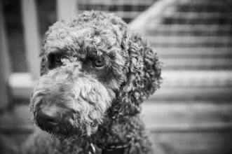 perthshire pet photography