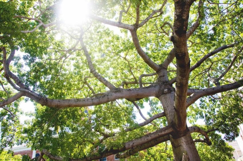 beautiful-trees