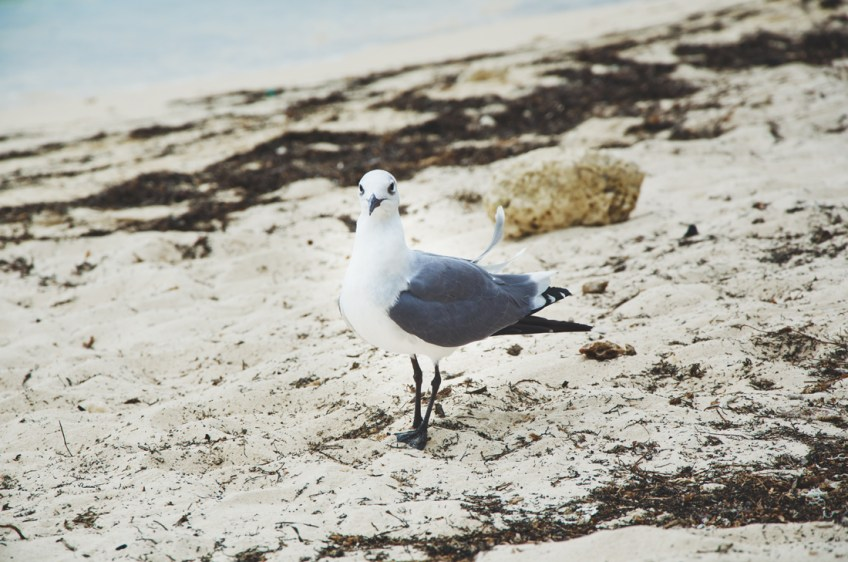 visitor-on-the-beach
