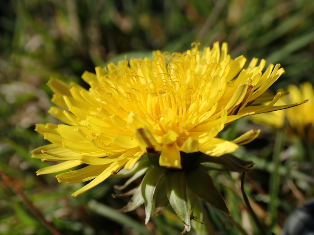 Botanical Taxonomy and the Naming of Things