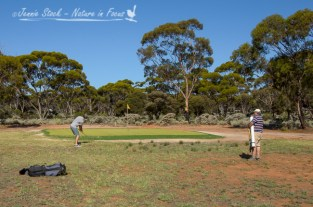 Chipping onto the green at Norseman