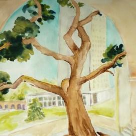 Caltech-Oak-through-Arch