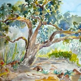 Huntington-Gardens---Canary-Oak-300dpi,-by-Jennifer-Bentson,-Watercolor
