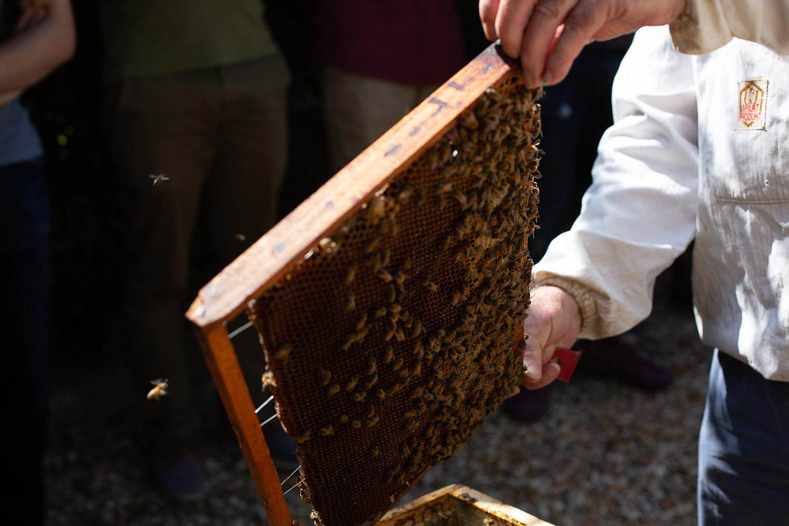 bd-bees-13