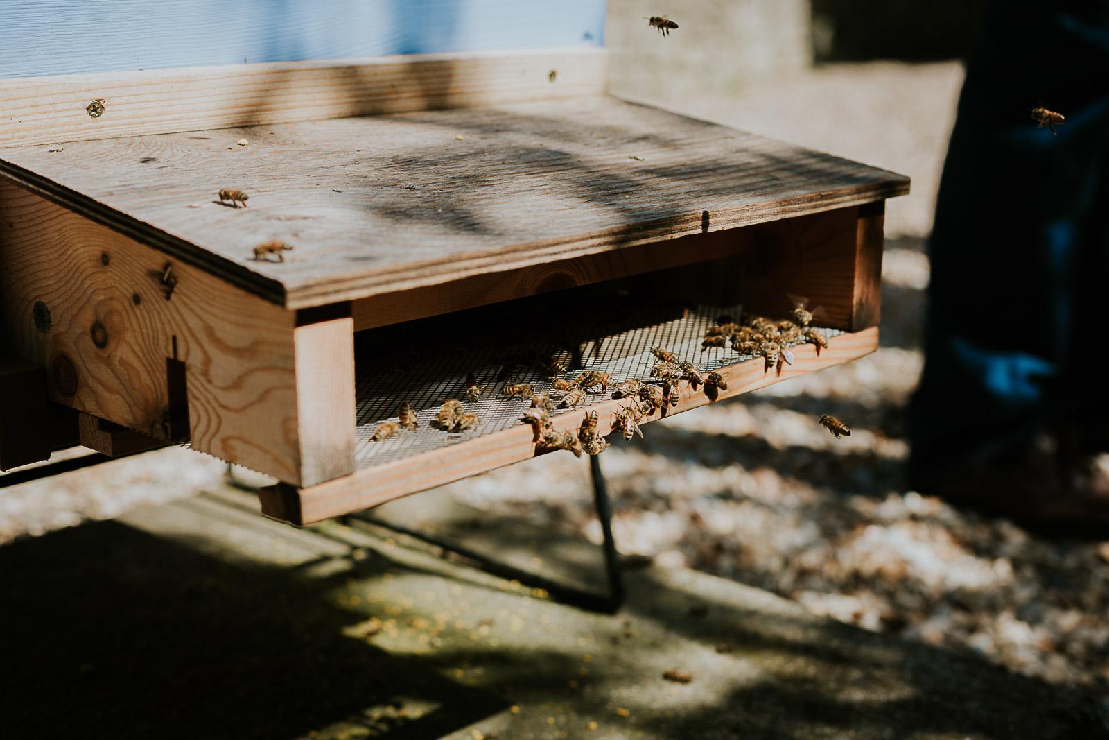 bd-bees-2