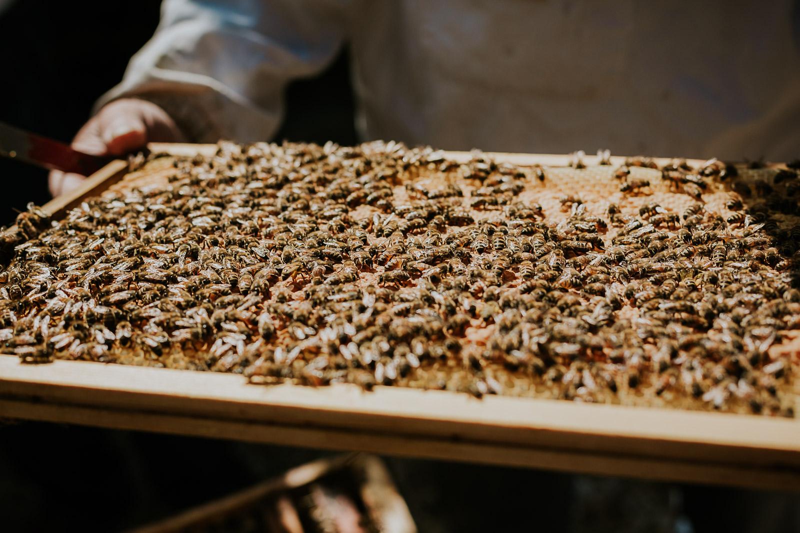 bd-bees-26
