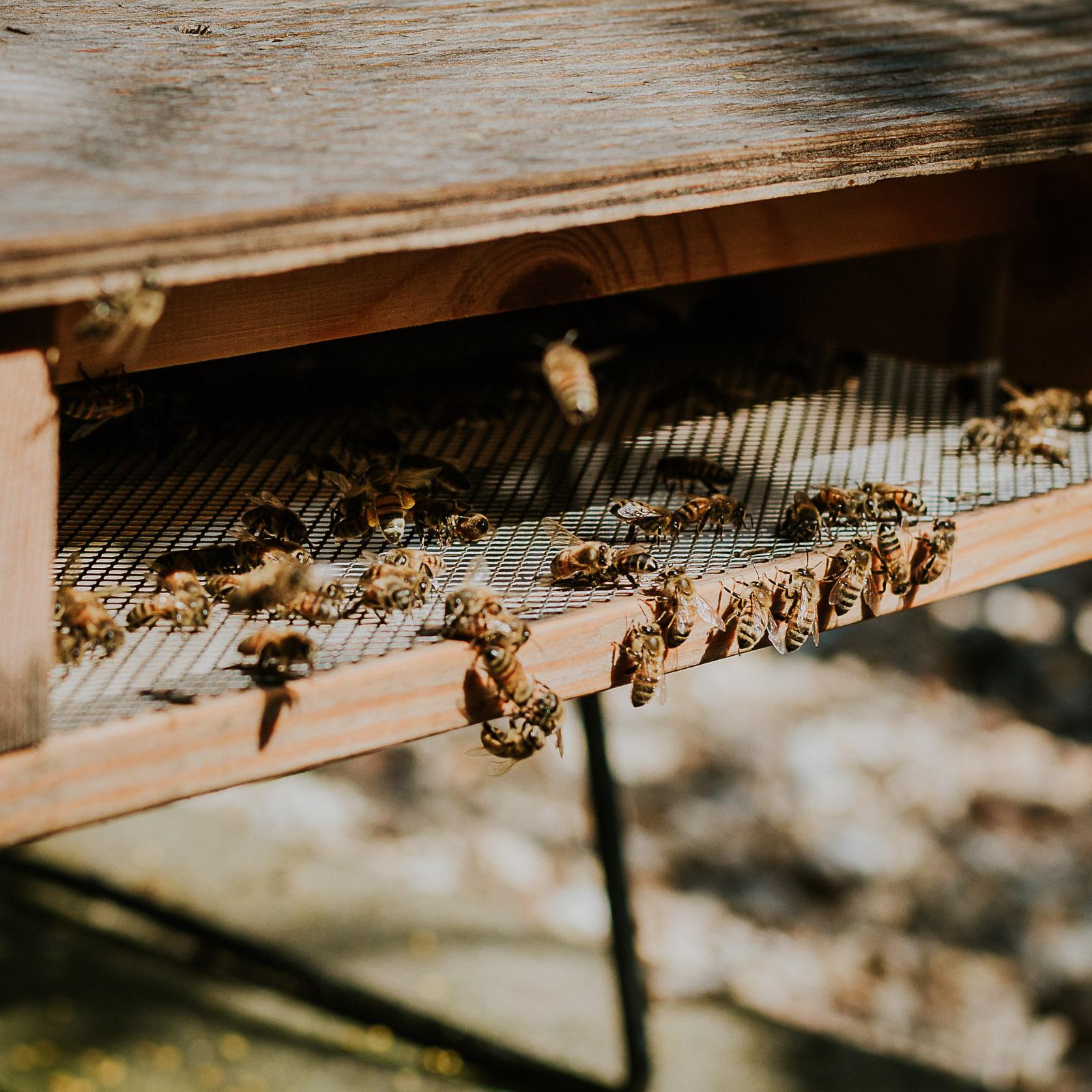 bd-bees-5