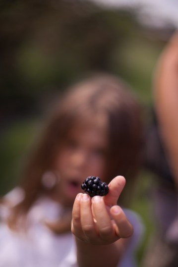 Blackberry Farm TX