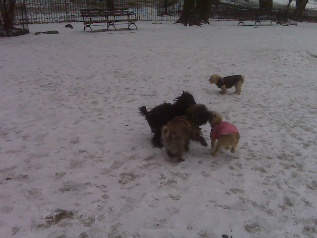 Puppy Pile-up