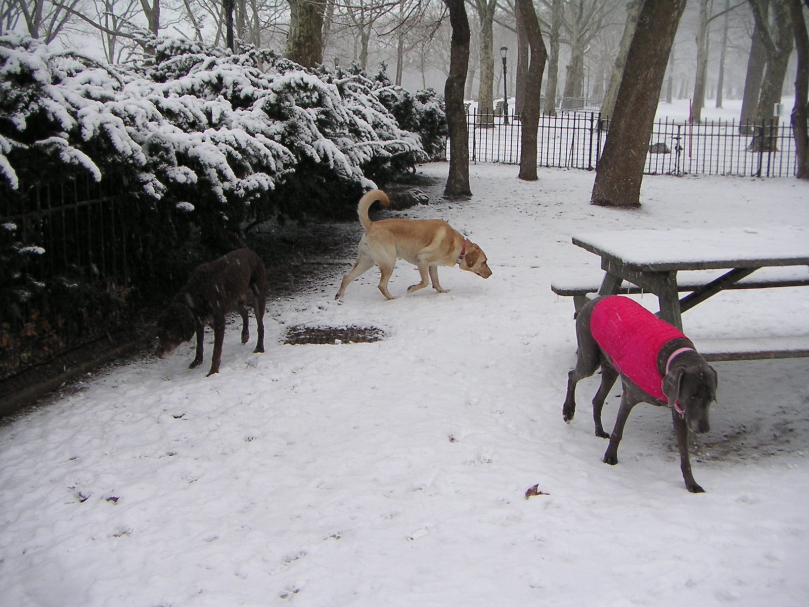 Snowy Sniff