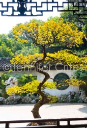 Yu Garden-02334