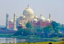 Taj Mahal complex from across the river. Cows grazing in the foreground.