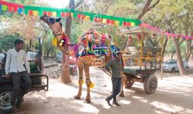 camel cart 428