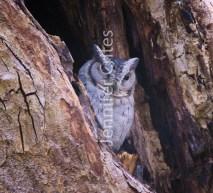 Ranthambore preserve 549