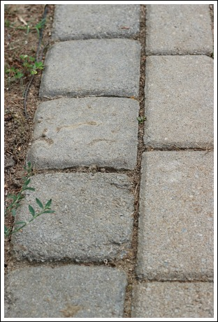 If You Are Looking For A Budget Friendly Sidewalk Idea, These Are Really  Cheap Patio Pavers.. But, As You Can Tell, They Lost Their Luster Over The  Years!