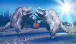 Basketball Raccoons