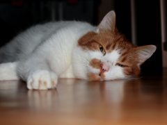 Boredom Cat