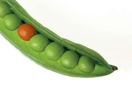 Unique Pea