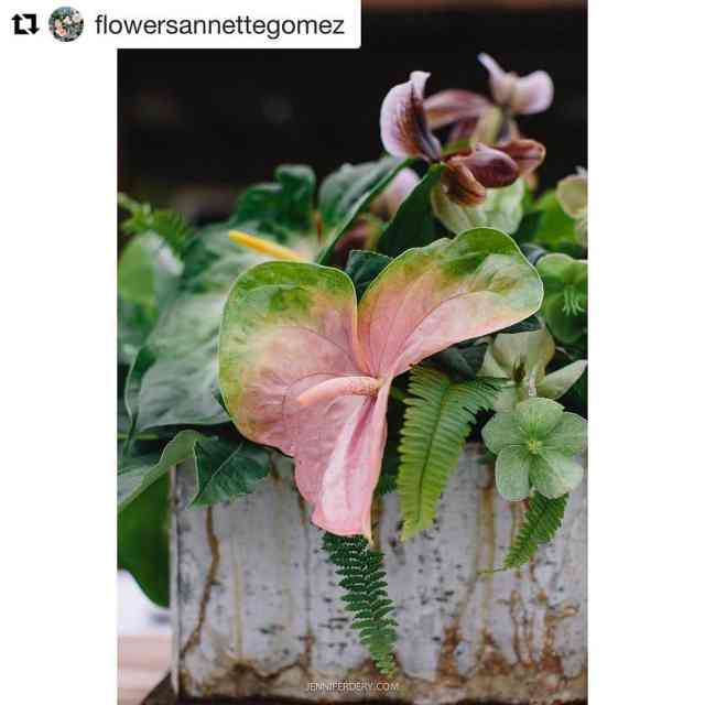 Thanks for featuring my photo flowersannettegomez !! All moms wouldhellip