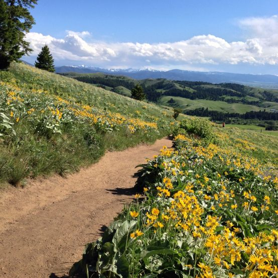 picture of the M Trail in Bozeman