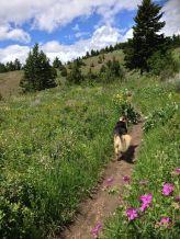 pic of Bridger Foothills trail
