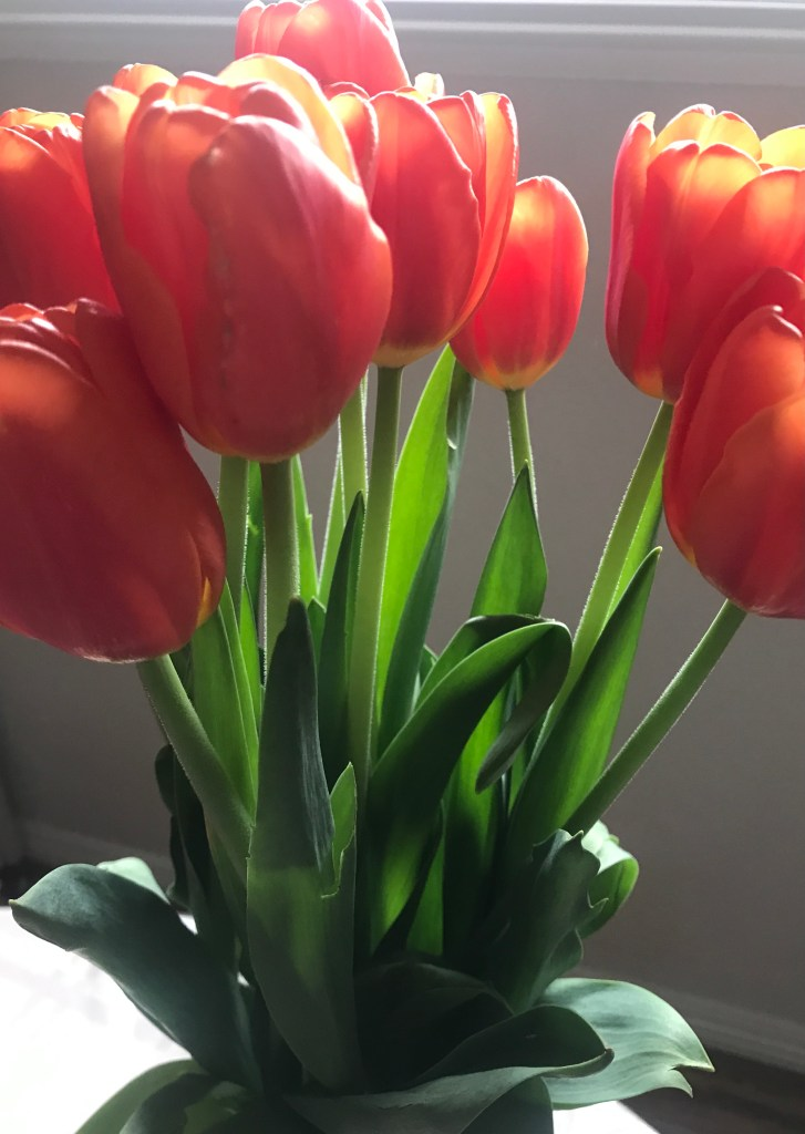 red-orange tulips with splashes of yellow in a vase