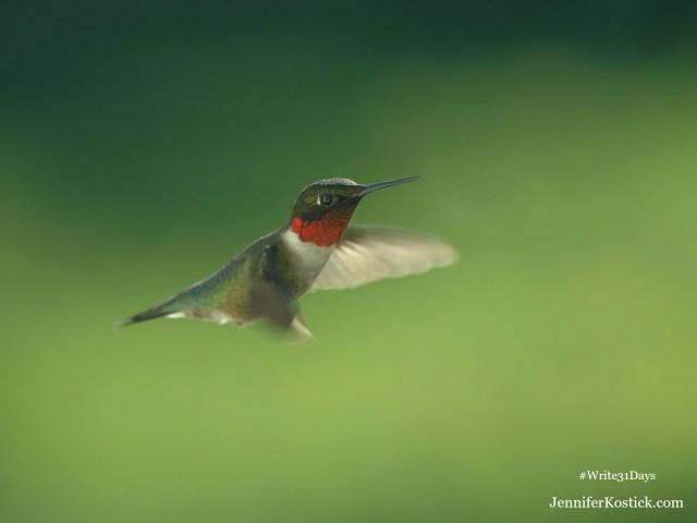 Stillness and the Hummingbird