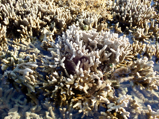 I did find one bleached coral.