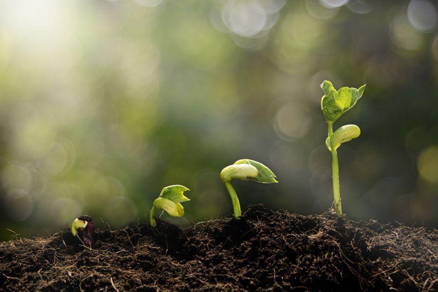 beauty, seeds