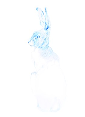 2blue hare cropastereplace colour