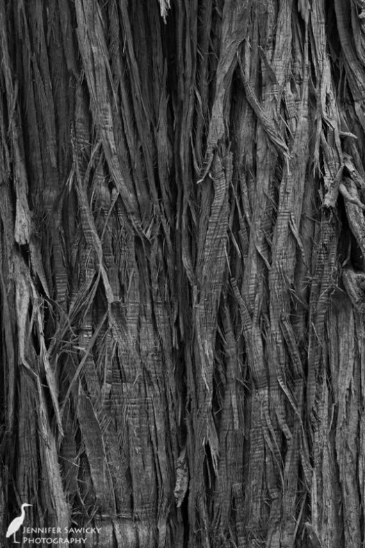 A close-up of cedar bark.
