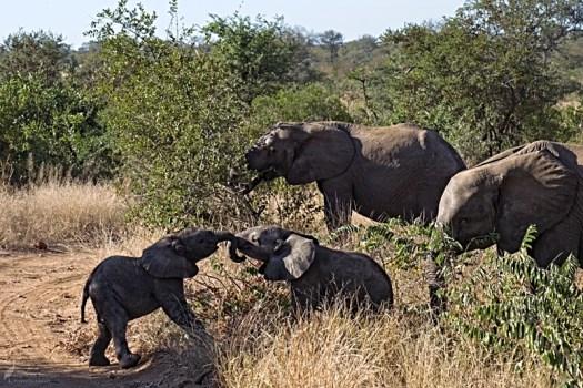 8am - Elephants