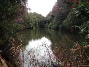 Manning River In Reserve