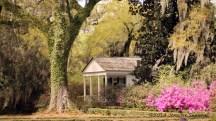 Side-house-w_azaleas_oak
