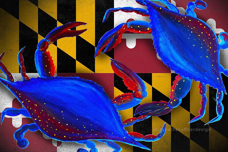 MD Blue Crabs 2017 Mixed graphic and traditional media