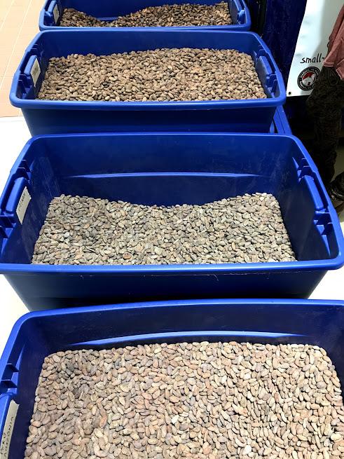 River-Sea beans