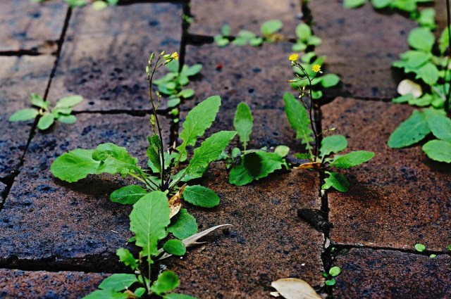 weeds growing in cracks