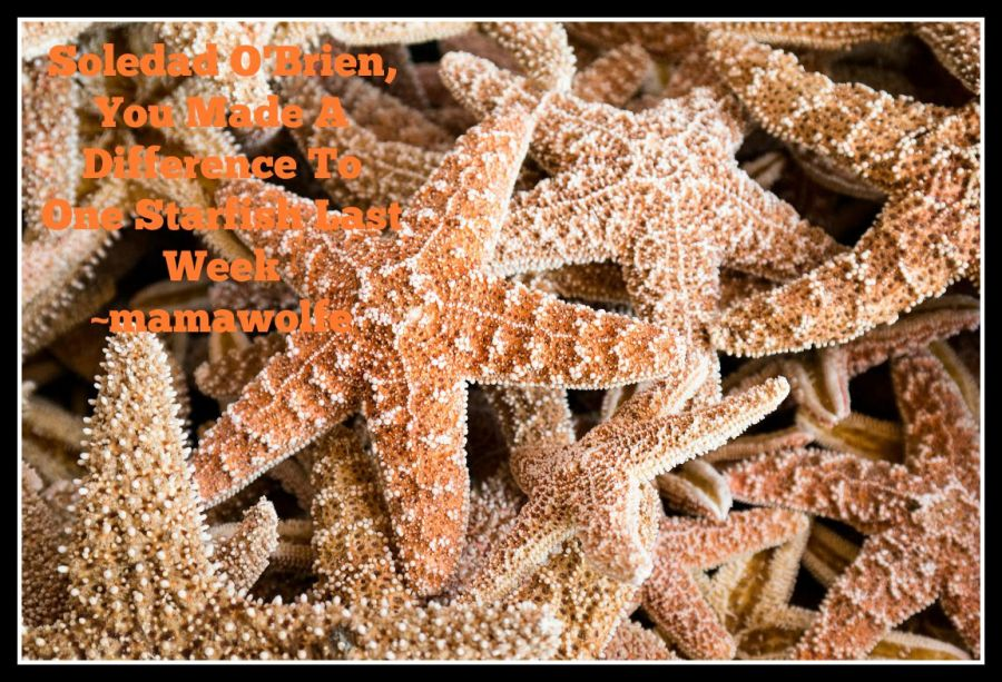 Soledad O'Brien, You Made A Difference To One Starfish Last Week