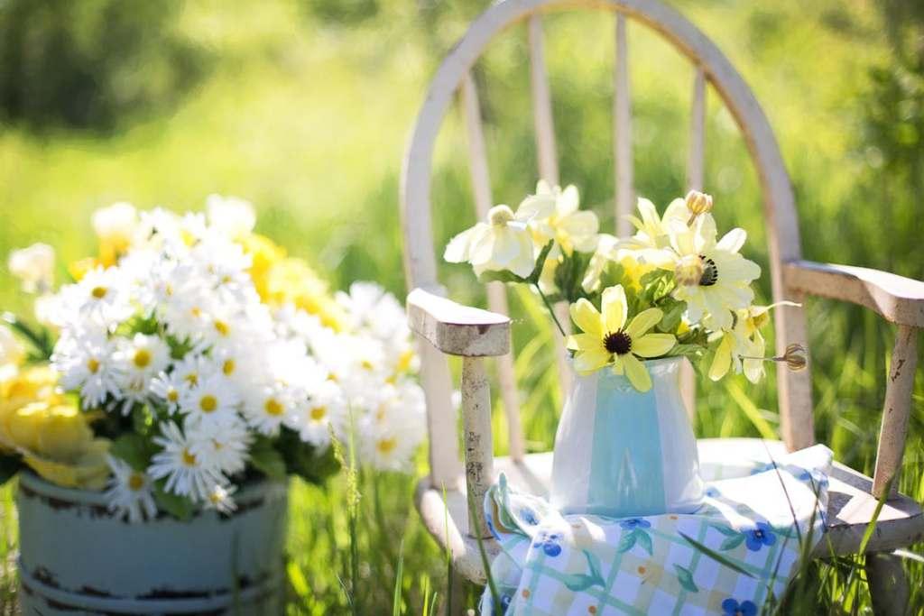 gardening daisies