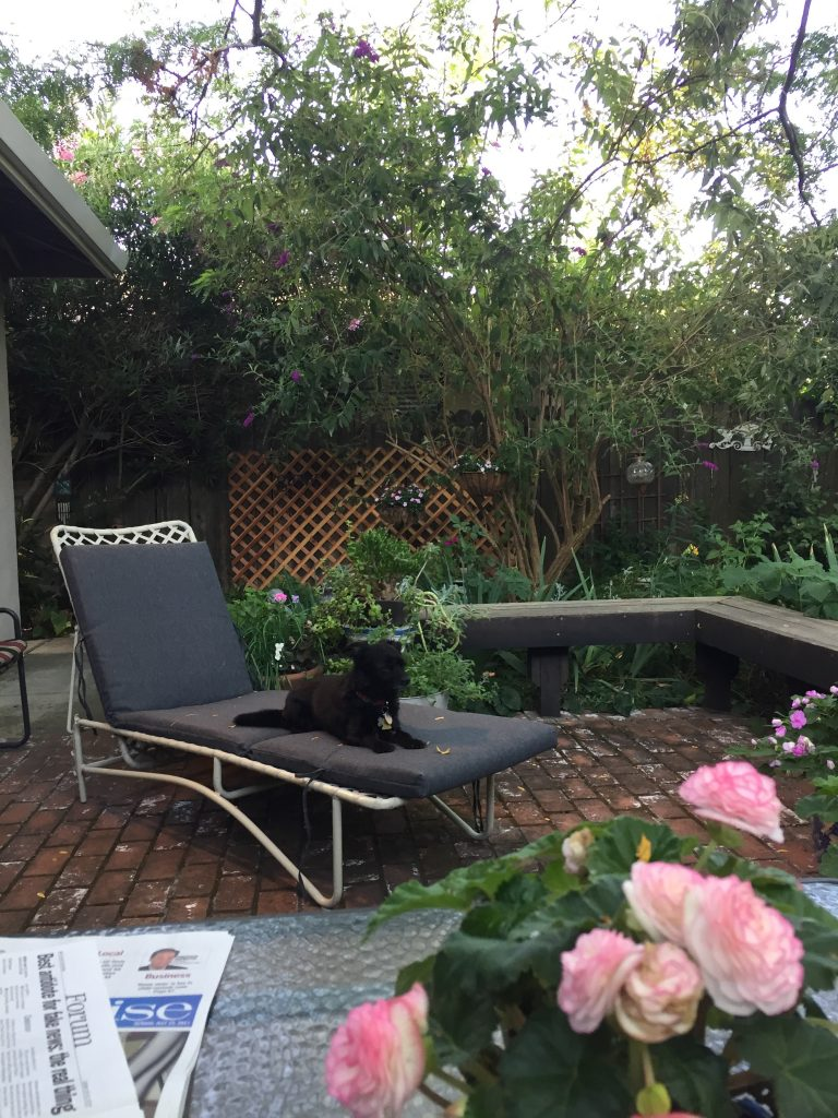 make your garden your sanctuary lounge
