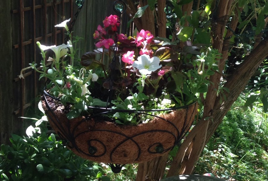 6 Tips To Making Your Garden Your Sanctuary