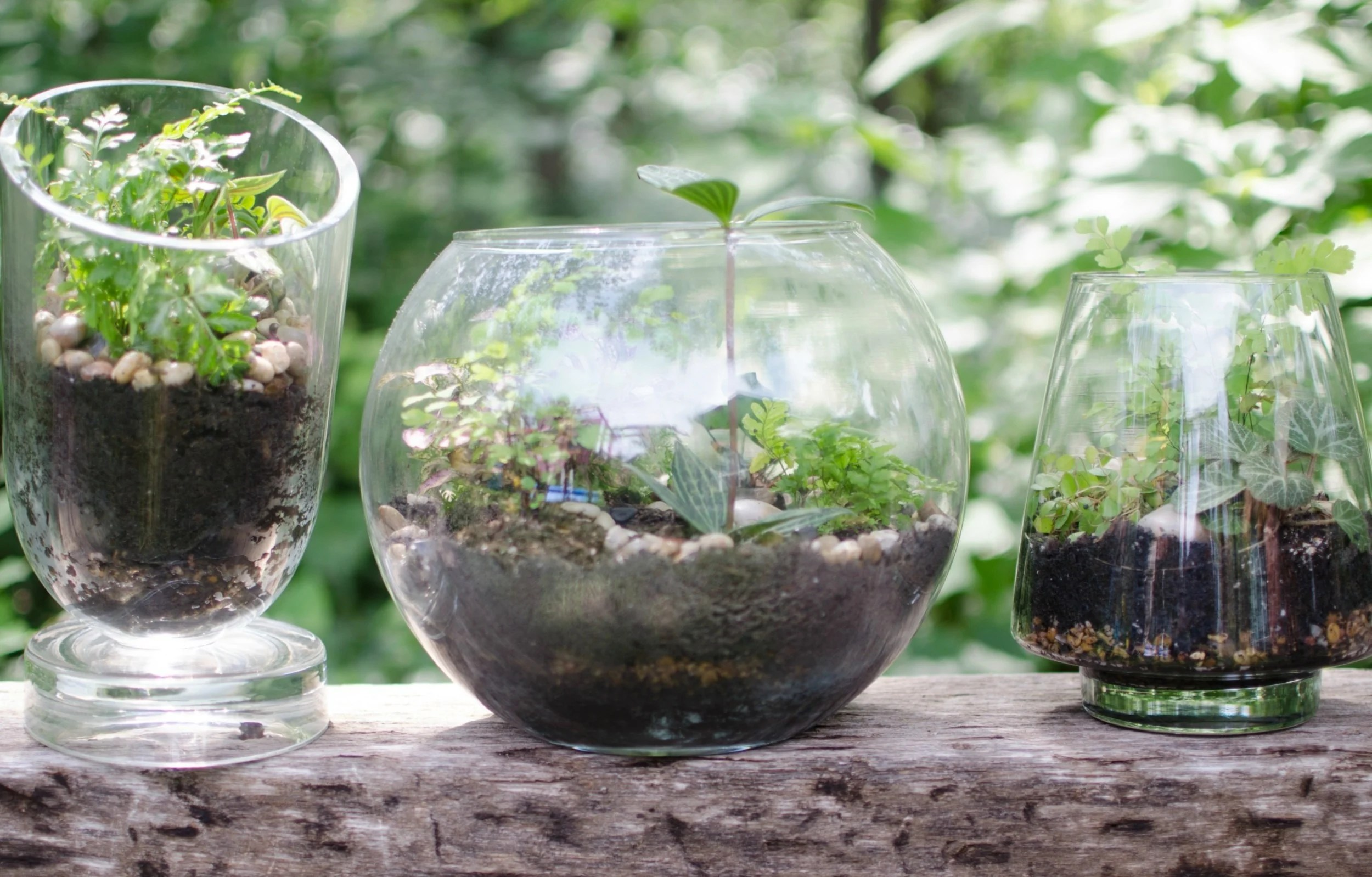 gorgeous diy terrariums jenni raincloud. Black Bedroom Furniture Sets. Home Design Ideas