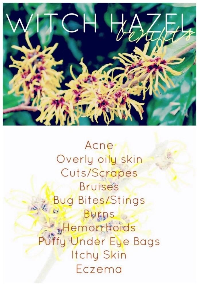 Beauty Uses of Witch Hazel