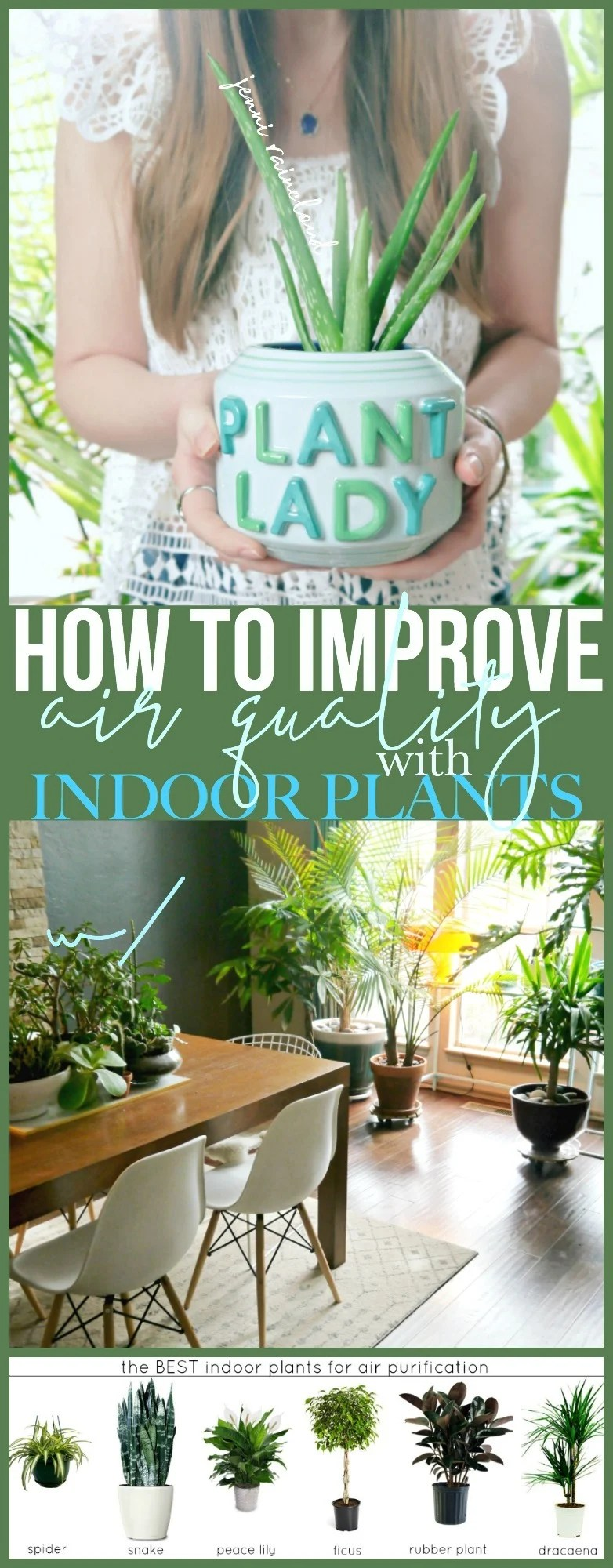 Air quality improvement with indoor plants