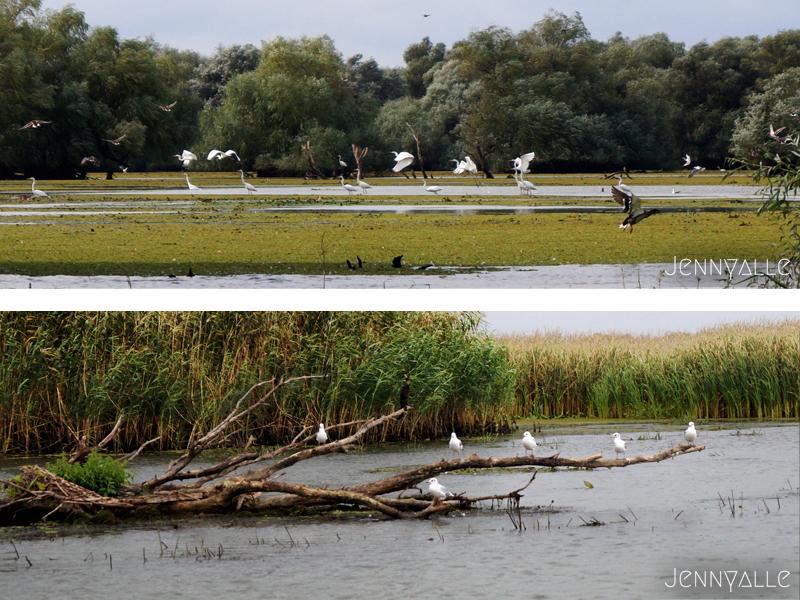 roumanie itinéraire delta danube réserve oiseau