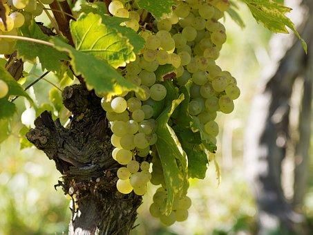 vineyards-1746131__340